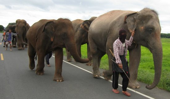 The nearby famous Surin Project - Save Elephant Foundation. http://surinproject.org/